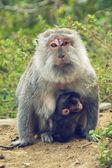 Monkey - çocuk ile anne — Stok fotoğraf