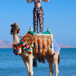 Woman Standing on a Camel — Stock Photo