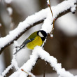 Winter bird — Stock Photo