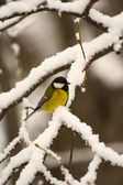 Uccelli invernali — Foto Stock