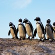 Stock Photo: Penguins standing on a rock