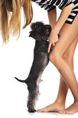 Girl and Yorkshire terrier — Stock Photo