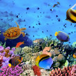 Foto Stock: Photo of coral colony on reef, Egypt