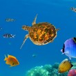 Underwater panorama with turtle, coral reef and fishes — Stock Photo