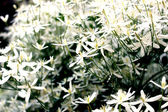 Shrub with white flowers summer sunny day — Stock Photo
