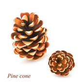 Vector Pine cones isolated on white — Stock Vector