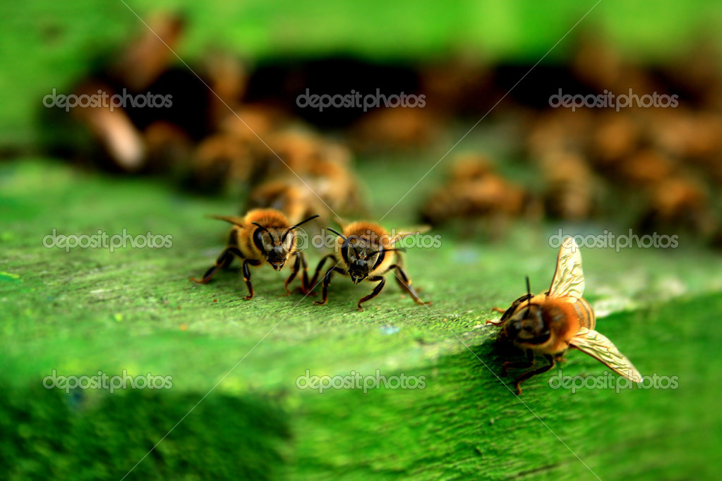 Group of working bees — Stock Photo #7402617