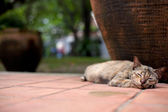 A cat was sleeping. — Stock Photo