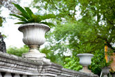 Jardiniere — Stock Photo