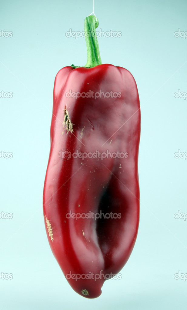 Red chilli peppers on white background  Stock Photo #6865106