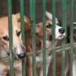 Puppies in the cage — Stock Photo #7088268