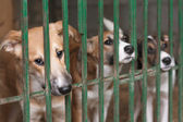 Puppies in the cage — Stock Photo