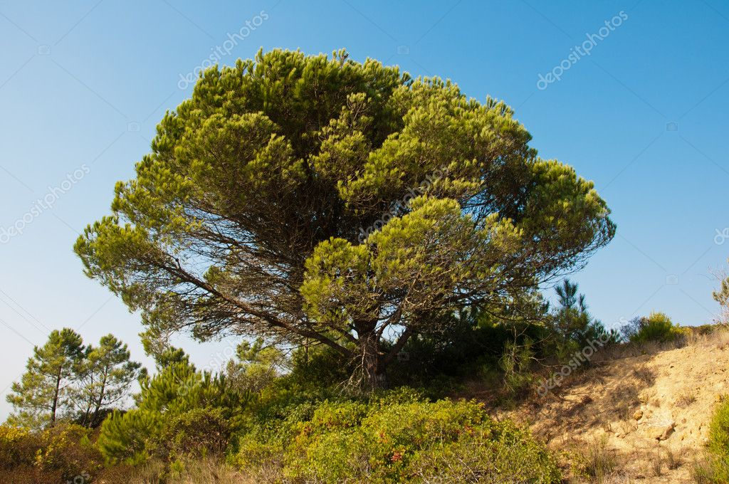 Nature in the mountains of wood on top of the village of Portugal — Stock Photo #7265542