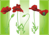 Summer poppies on green strips — Stock Vector