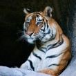 Bengal Tiger Portrait — Stock Photo
