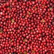 Stock Photo: Wild cranberries