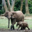 Постер, плакат: The kid the elephant calf with mum