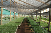 Greenhouse with planting — Stock Photo