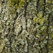 Stock Photo: Partial view of tree trunk bark