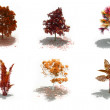 3d autumn trees pack with shadows — Stock Photo #6887560