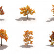 3d autumn trees pack with shadows — Stock Photo #7553555