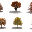 3d autumn trees pack with shadows — Stock Photo #7553568