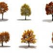 3d autumn trees pack with shadows - Stock Photo