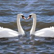 Stock Photo: Two swans in love