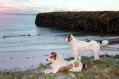 Pohled na pláž s dvěma psy — Stock fotografie