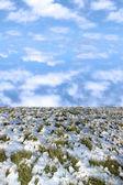 蓝多云天空在雪覆盖绿草 — 图库照片