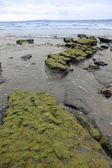 Green mud rocks — Stock Photo