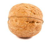 Single ripe walnut — Stock Photo