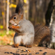 Stock Photo: Red funny squirrel