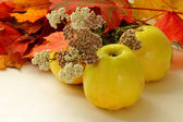 Apples, Autumn leaves and flowers — Stock Photo