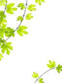 ぶどうの葉とのロマンチックなグランジ背景 — ストック写真