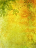 Romantic grunge background with grape leaves — 图库照片