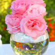 Pink roses on in a glass vase — Stock Photo