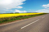 Empty road with fields of canola — Foto Stock