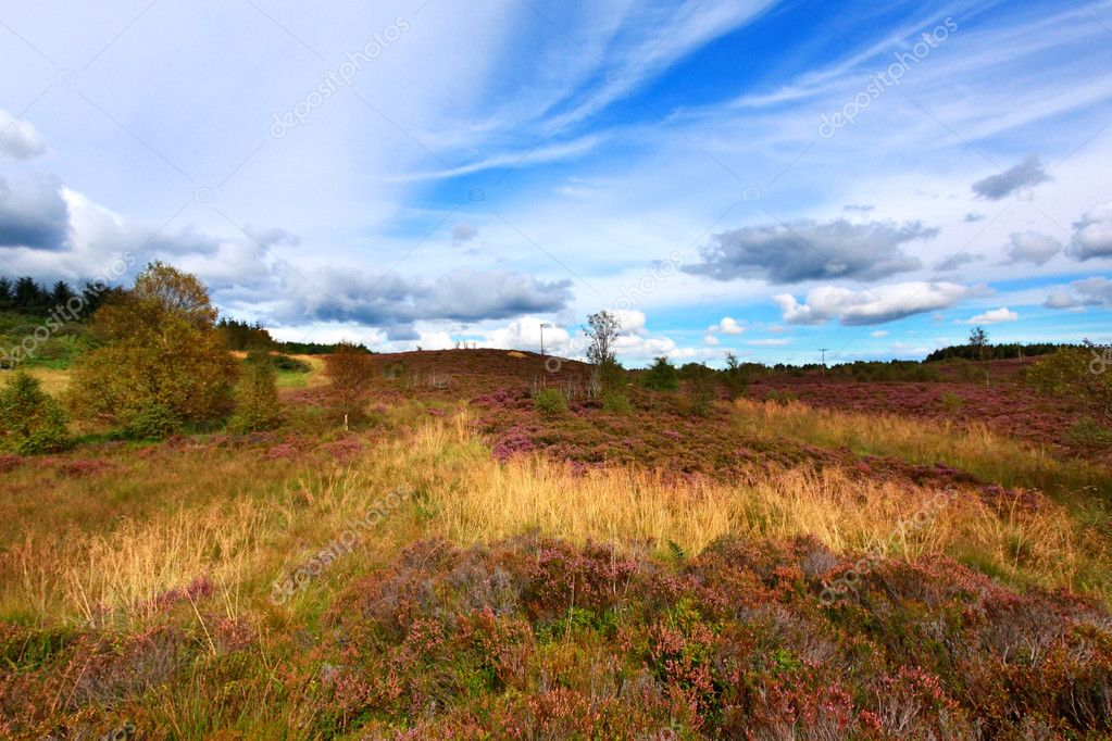 Scottish fields of heather on a sunny day — Stock Photo #6910871