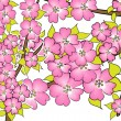 Cherry blossom drawing on white - Stock Photo