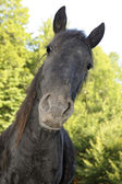 Curios horse — Stock Photo