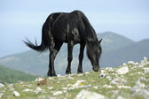 Black horse graze — Stock Photo