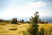 Beautiful summer landscape in the czech mountain krkonose — Foto de Stock