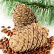 Pine nuts, with cedar cones and fir tree in the background — Stock Photo