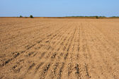 Furrows in the field — Stock Photo