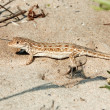 Royalty-Free Stock Photo: Lizard on the sand
