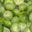 Heap of cabbage heads — Stock Photo