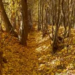 Ravine in autumn woods — Stock Photo