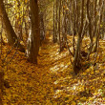 Ravine in autumn woods — Stock Photo