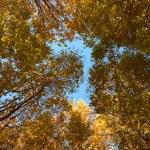 Crown of various autumn trees — Stock Photo